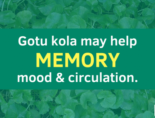 Gotu Kola may help Memory, Mood, Circulation and more