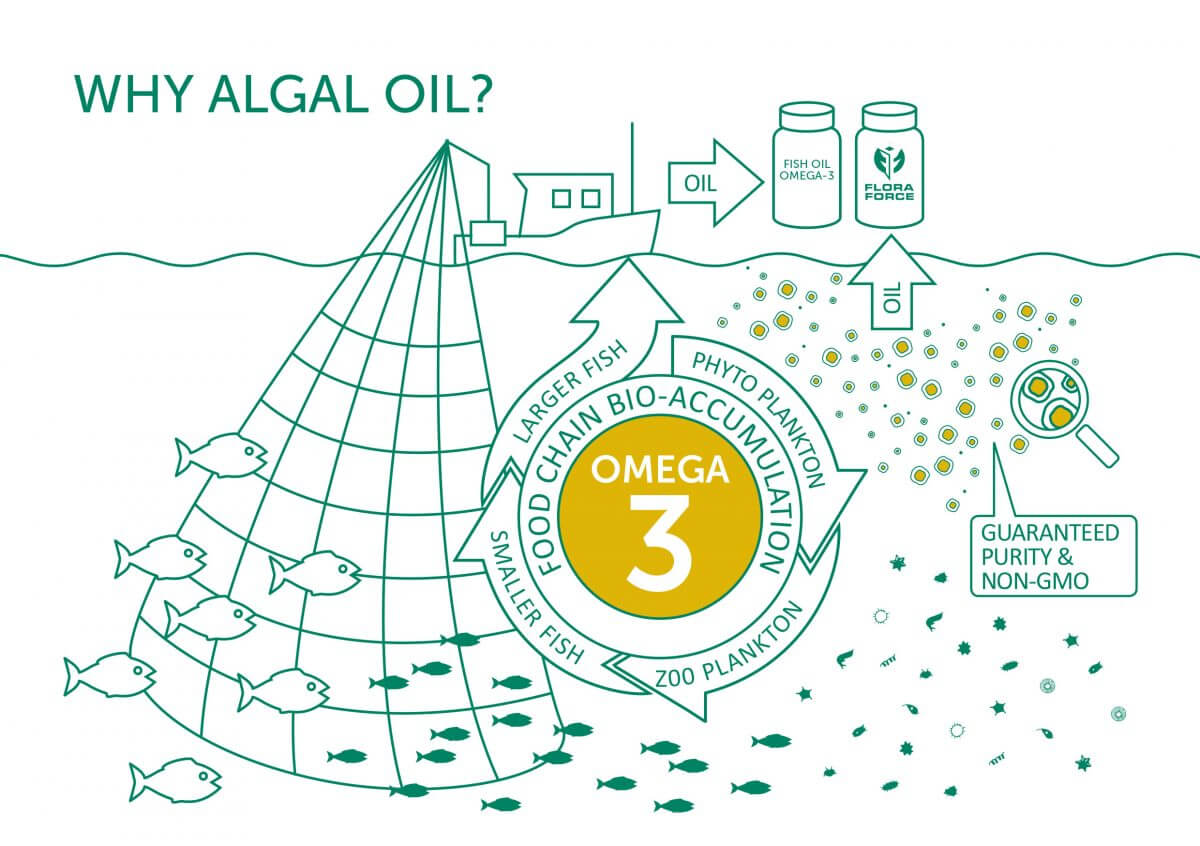 Why should I use Algal Oil as a source of Omega 3?